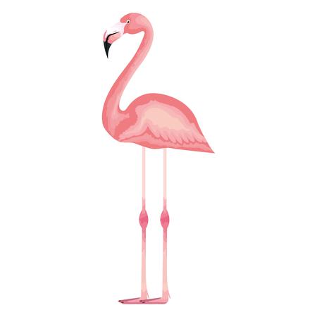 exotic and tropical flemish bird vector illustration design Banco de Imagens