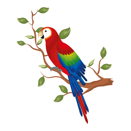 exotic and tropical parrot in branch tree vector illustration design Banco de Imagens