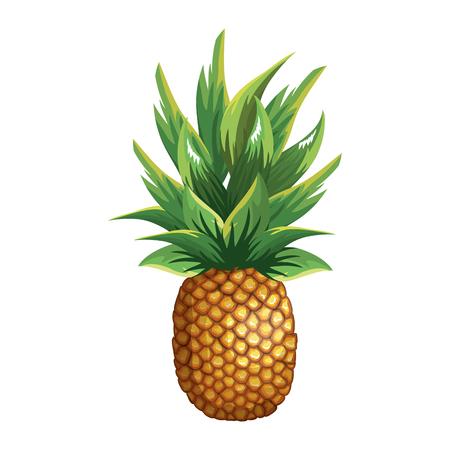 Fruits tropicaux et exotiques illustration vectorielle design Banque d'images - 96256617