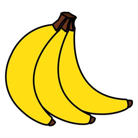 tropical and exotic banana fruit vector illustration design
