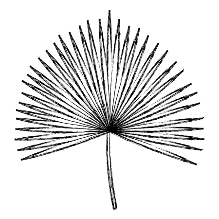 Tropical leaf palm icon vector illustration design
