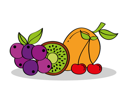 grapes kiwi cherry fruits nutrition vector illustration Stock Vector - 96337812