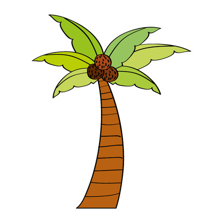 Palm coconut plant tree beach flora vector illustration Çizim