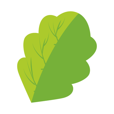 A spinach leaf icon over white background vector illustration