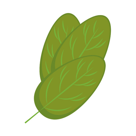 Hand drawn lettuce leaf over white background vector illustration