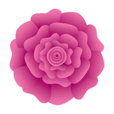 decorative natural carnation flower top view vector illustration Ilustracja