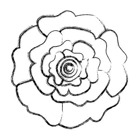 장식 자연 카네이션 꽃 상위 뷰 벡터 일러스트 스케치 디자인 스톡 콘텐츠 - 96470781