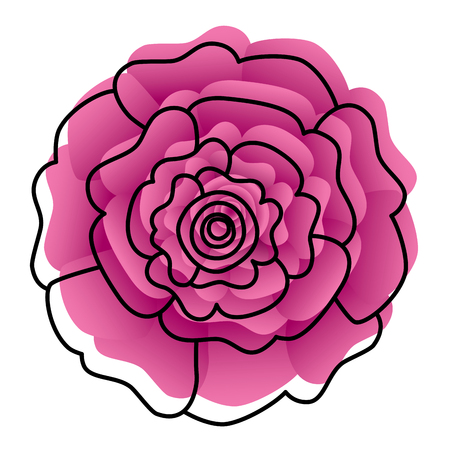 decorative natural carnation flower top view vector illustration Stock Illustratie
