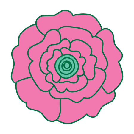 decorative natural carnation flower top view vector illustration pink and green design Иллюстрация