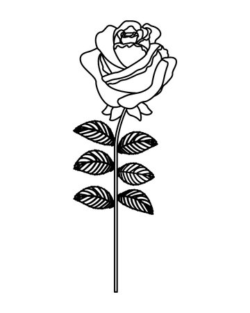 delicate flower rose stem leaves nature decoration vector illustration outline desing