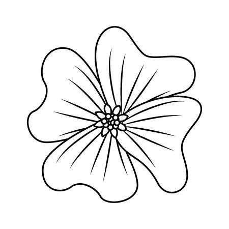 flower periwinkle delicate decoration floral nature petals vector illustration outline desing