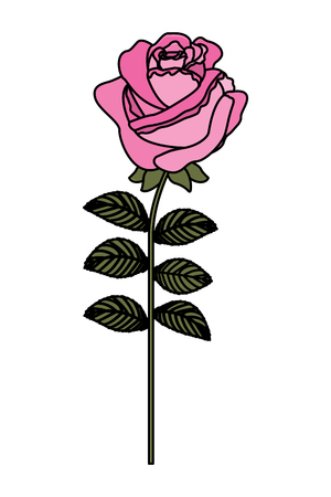 delicate flower rose stem leaves nature decoration vector illustration