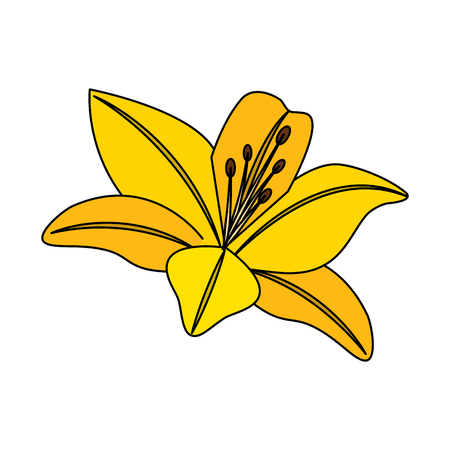 flower lily delicate decoration floral nature petals vector illustration