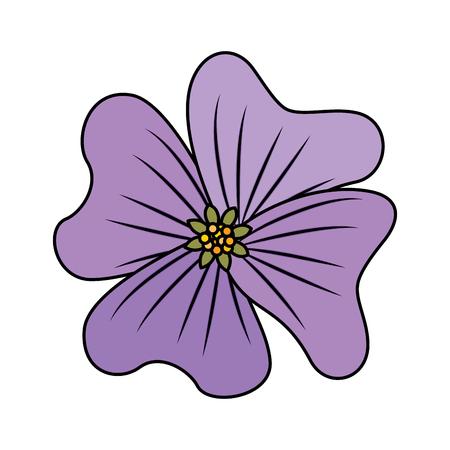 flower periwinkle delicate decoration floral nature petals vector illustration
