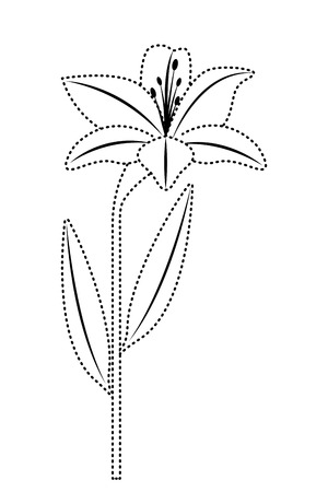 Flower lily natural leaves plant decoration vector illustration dotted line image
