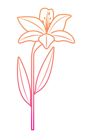 flower lily natural leaves plant decoration vector illustration degrade color line image