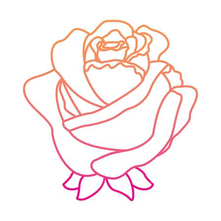 Rose delicate decoration vector illustration Illustration