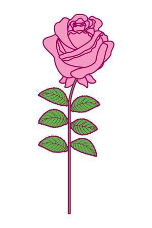 A delicate flower rose stem leaves nature decoration vector illustration pink and green image