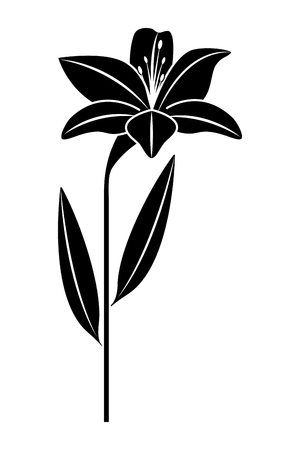Flower lily natural leaves plant decoration vector illustration black image Ilustracja