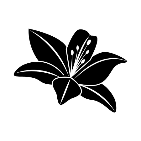 A flower lily delicate decoration floral nature petals vector illustration black image