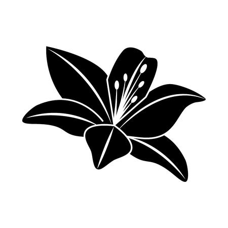 A flower lily delicate decoration floral nature petals vector illustration black image