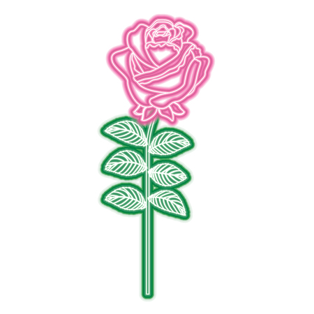 Delicate flower rose stem leaves nature decoration vector illustration neon pink and green line image