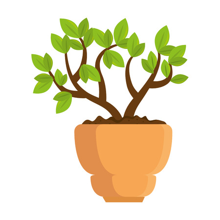 beautiful bonsai houseplant in pot vector illustration design Фото со стока - 96617498