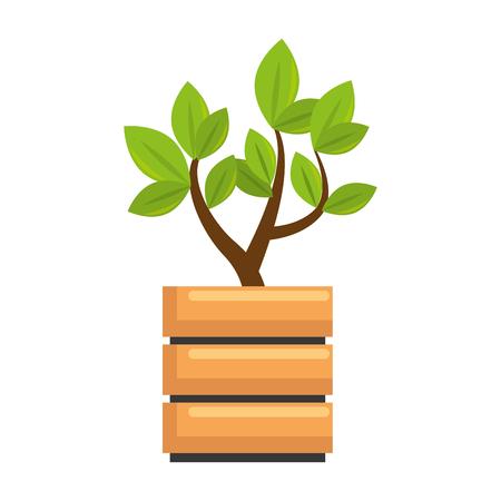beautiful bonsai houseplant in pot vector illustration design
