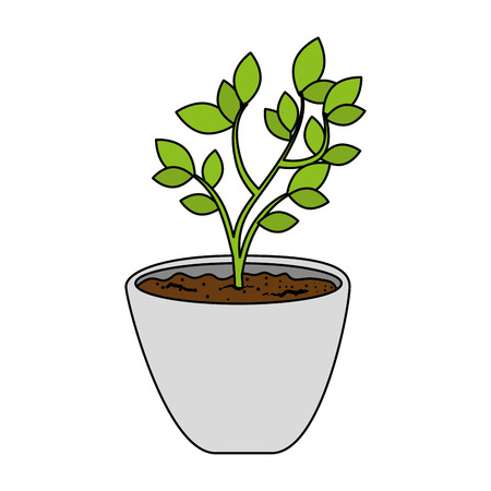 Beautiful bonsai houseplant in pot vector illustration design Фото со стока - 96531908