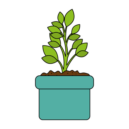 beautiful bonsai houseplant in pot vector illustration design