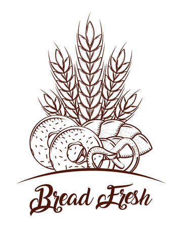 bread fresh wheat spike donuts and pretzel sketch image vector illustration