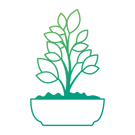 beautiful bonsai houseplant in pot vector illustration design Фото со стока - 96575864