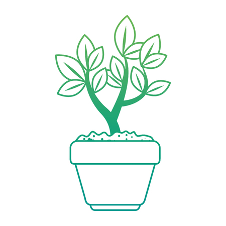 beautiful bonsai houseplant in pot vector illustration design Фото со стока - 96575869