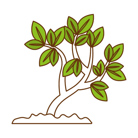 beautiful tree plant cultivated vector illustration design