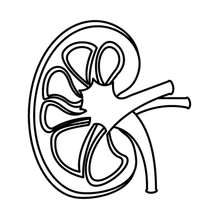 sick human kidney organ veins part icon vector illustration  outline design