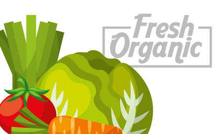 Vegetables lettuce tomato carrot fresh organic healthy banner vector illustration