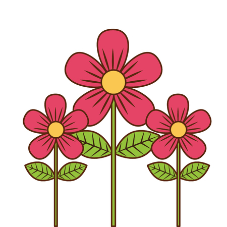 beauty pink flowers decoration leaves stem petals vector illustration