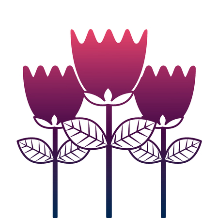 tulip flowers decoration natural romantic vector illustration degrade color design Illustration