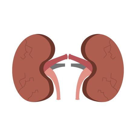 腎臓ヒト不健康疾患医療解剖学的損傷ベクターイラスト