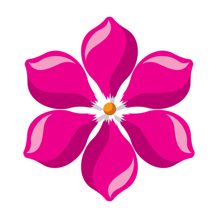 frangipani flower vector illustration