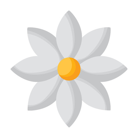 flower jasmine  vector illustration