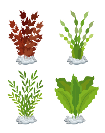 seaweed aquarium decoration set vector illustration design