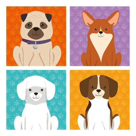 cute dogs mascots icon vector illustration design