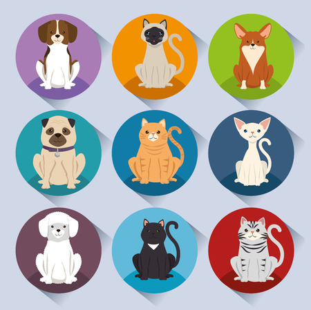 dogs and cats pets characters vector illustration design