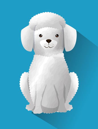 cute French poodle dog vector illustration design