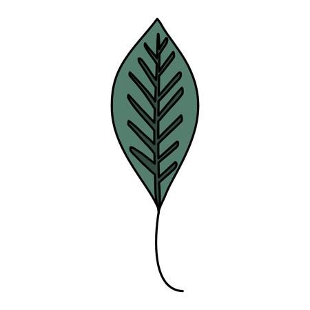 leafs plant ecology icon vector illustration design Banque d'images - 97537597