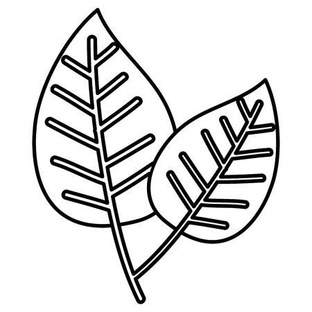 Leaves ecology icon vector illustration design