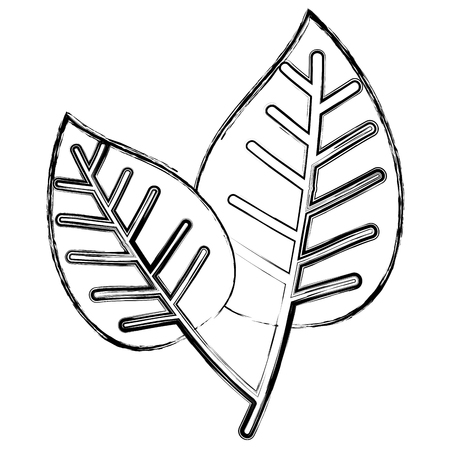 leafs plant ecology icon vector illustration design Banque d'images - 97893806