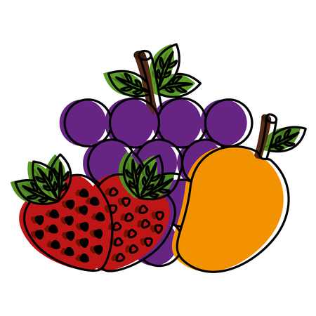 fruit food healthy lifestyle strawberry grapes  vector illustration