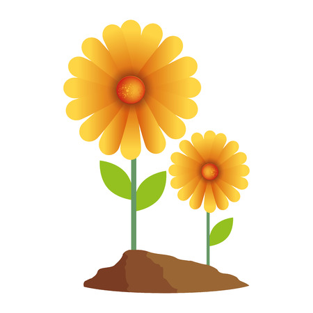 beautiful sunflower cultivated colorful vector illustration design Stok Fotoğraf